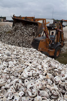 Curtis Miller, president and owner of Miller Seafood Company, dumps empty oyster shells. Fueled by Texas' ongoing drought, the algae bloom — known as Karenia brevis — thrives in warm, salty water and has spread through the bays and islands along Texas' 350-mile coast. Eric L. Kayne, for USA TODAY