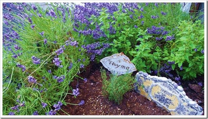 lavender 6.12 001