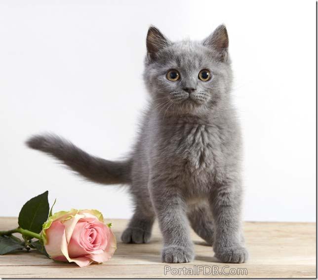 imágenes de Flores con te amo para el día del amo