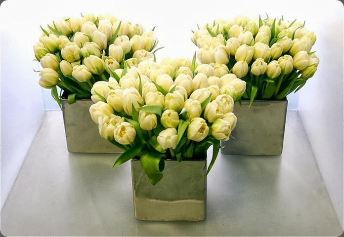 tulips 168280_181831221839548_1324271_n michael george