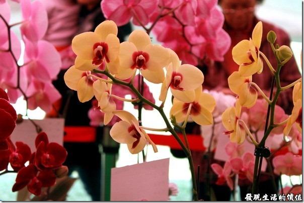 2012台南蘭花展14