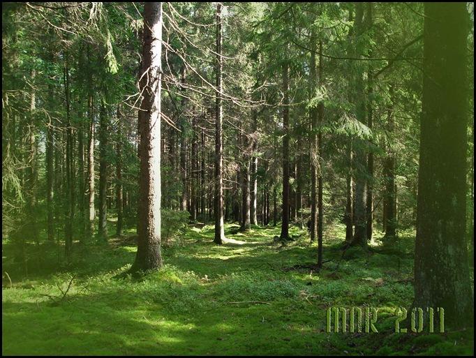 i-svampskogen