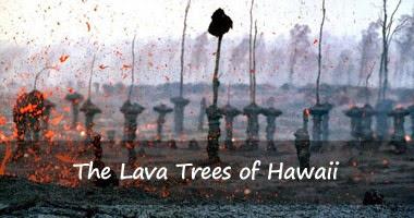 lava-trees