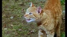 07 le chat