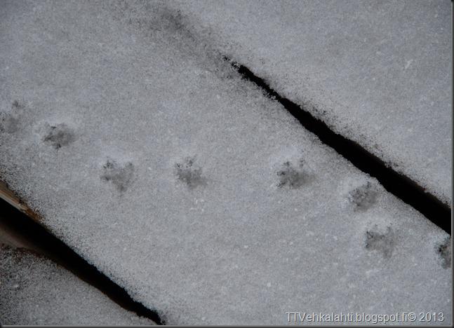 myllykoski jälkiä lumessa 027