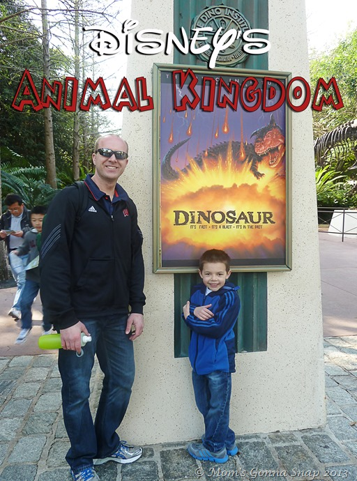 Animal Kingdom by MomsGonnaSnap