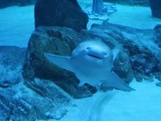 2015.01.25-070 requin