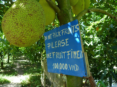 23. nu culegeti fructe.JPG