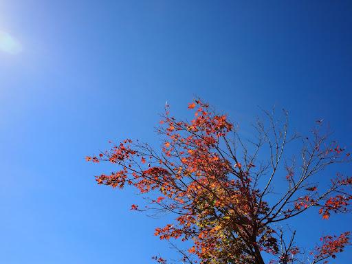 [写真]西臼塚では紅葉が始まっている