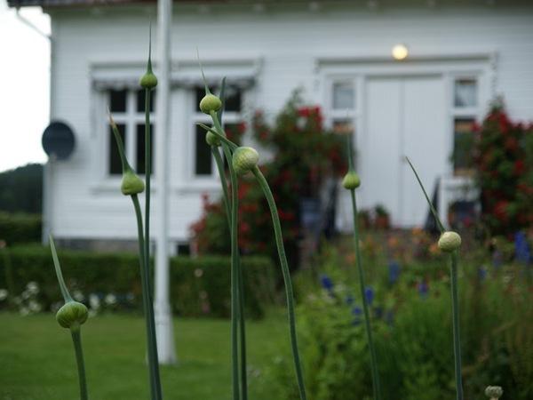 2012-07-13 Hagen på Møll (85)