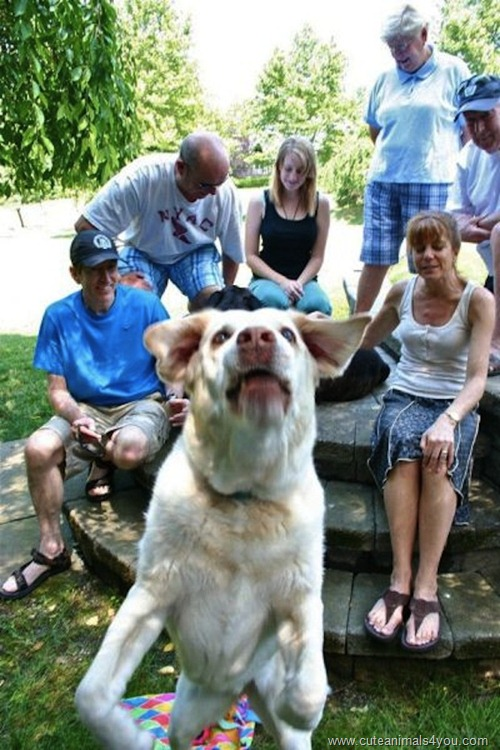 50_Funniest_Animal_Photobombs_Of_All_Time_32
