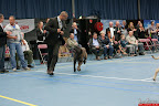 20130510-Bullmastiff-Worldcup-1336.jpg