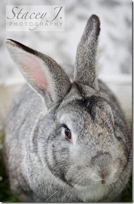 Thumper 001 copy
