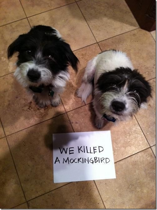 dog-shaming-bad-40