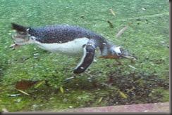16_12_2014-13_18_35-6169Edinburgh Zoo