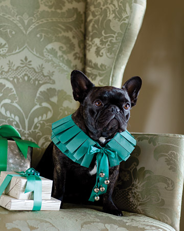 Francesca looks amazing in this ribbon collar. (marthastewart.com)