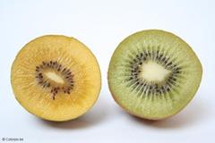 Golden киви слева, справа - обычный киви