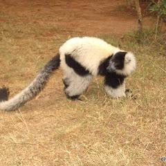 Lemurs Park::IMGP4467