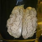 human_brain03.JPG