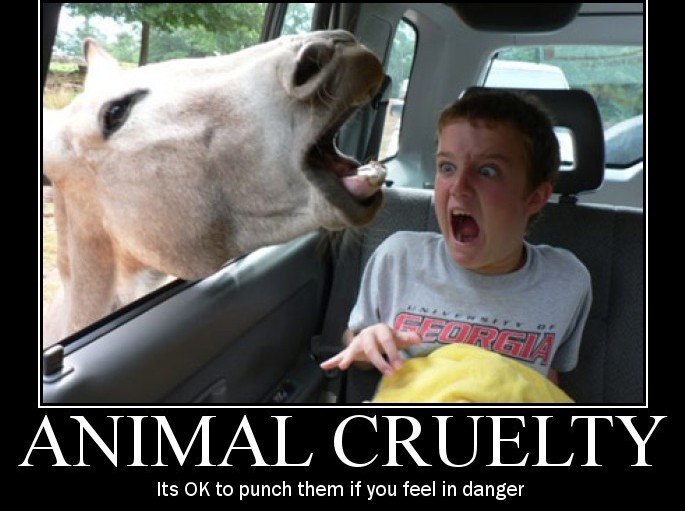 Animal Cruelty Quotes [60] Quotes Links Simple Animal Abuse Quotes