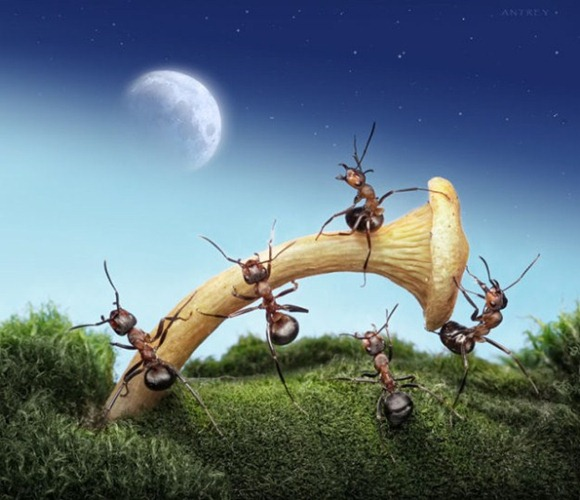 Life-of-Ants-Andrey-Pavlov-16