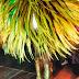 Carnaval Estocolmo 2012. Foto: Ztefan Bertha