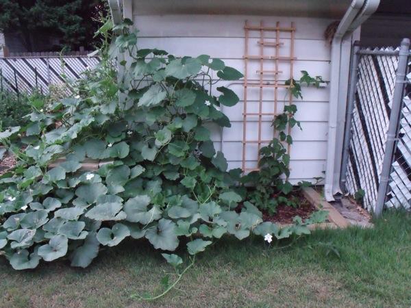 20120709 garden 005