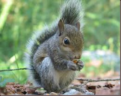 Amazing Animals Pictures Squirell (5)