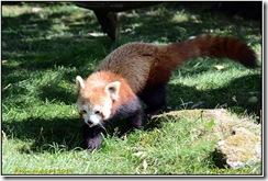 Cotswolds Wildlife Park