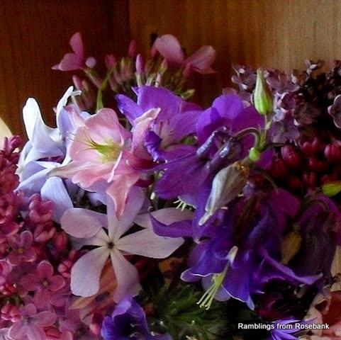 phlox, aquilegia, lilac, sweet rocket