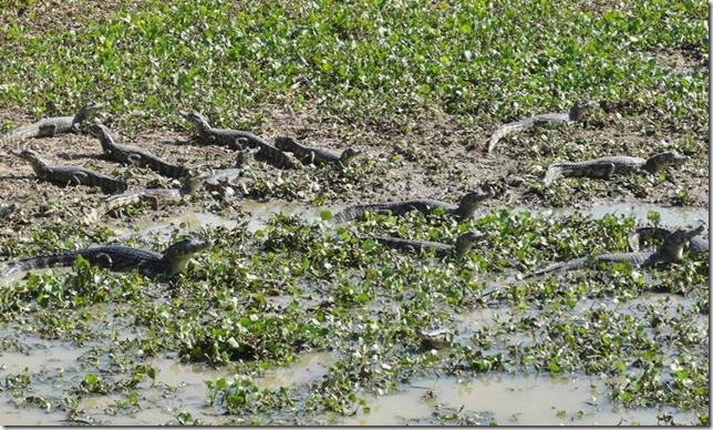 Pantanal_DSC08632
