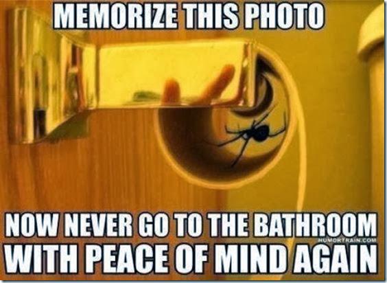 australia-scary-spiders-007