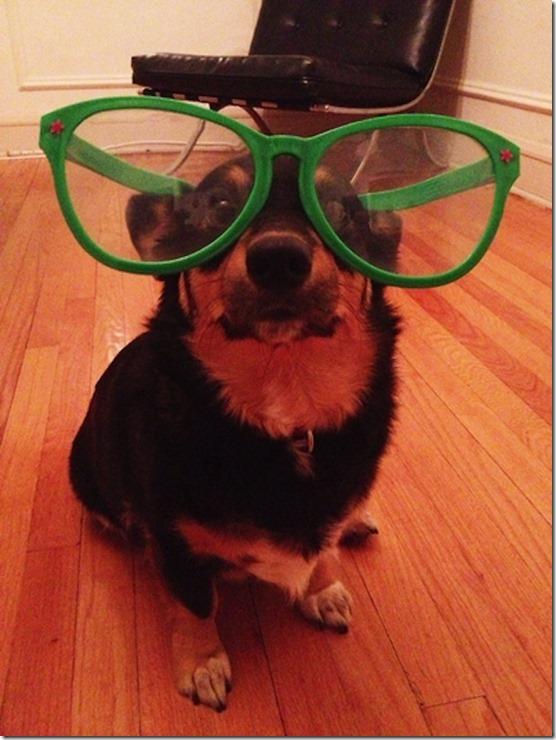dogs-no-clue-22