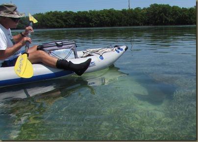 kayaking nurse shark