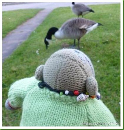 Dawlish Warren Ducks