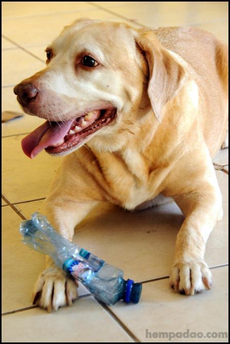 cadela sara presa em 2008 na Marcha da Maconha hempadao