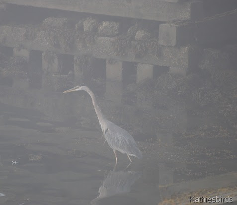 5. heron-kab