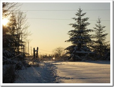20120115_sunny-winter-day_013