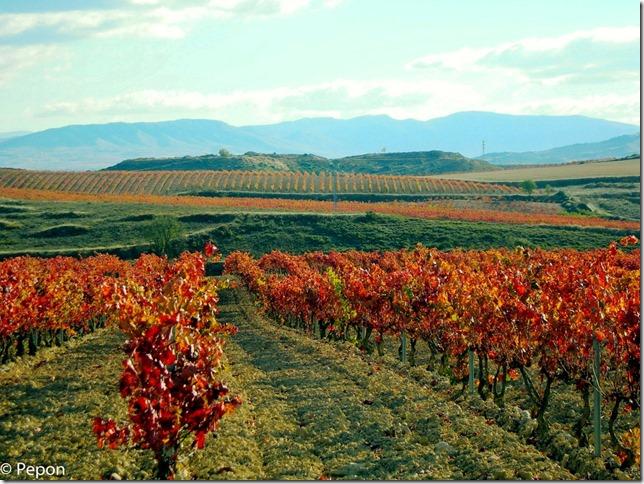 Viñedos de la Rioja Alavesa 2