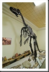 2011Aug1_Museum_of_Geology-2