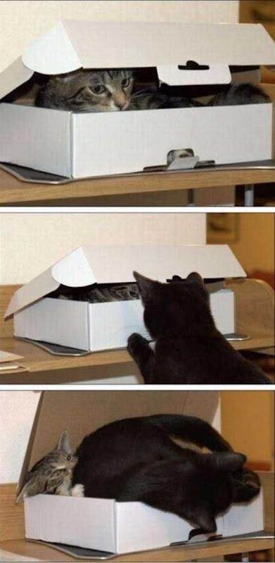 Os gatos não são muito bons em esconde-esconde 11