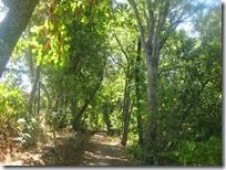εκδρομή στο δάσος (1)