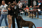 20130510-Bullmastiff-Worldcup-1219.jpg