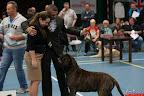 20130510-Bullmastiff-Worldcup-1219.jpg
