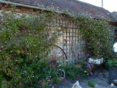 garden june 2011 009