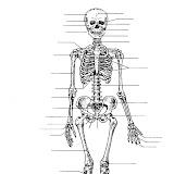 Sistema óseo para completar con los nombres