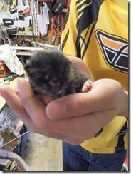 kittens day 1-3  03
