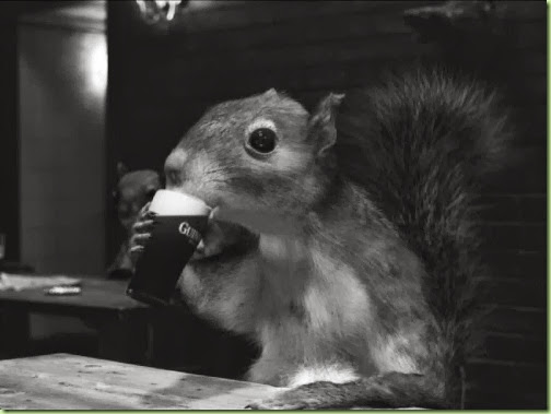 a squirrel and his guinness_Draught4