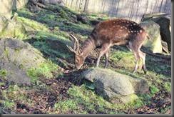 16_12_2014-11_00_49-6062Edinburgh Zoo