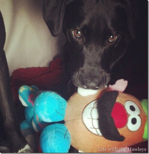 Rooney & Mr Potato Head